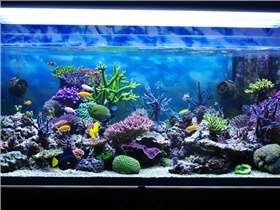 Conseils pour bien nettoyer un aquarium