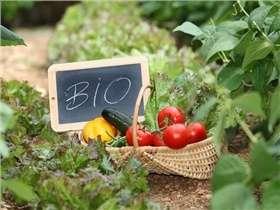 6 astuces pour manger bio sans se ruiner