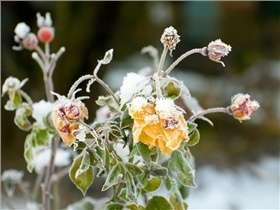 Conseils pour protéger vos plantes du gel