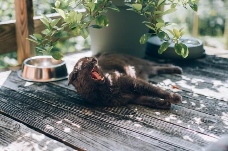 10 conseils pour protéger son animal de la chaleur