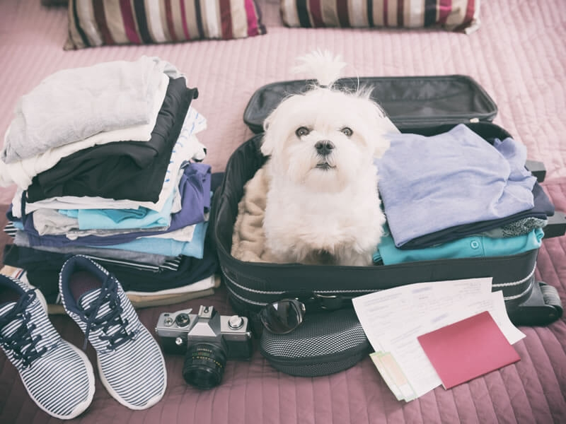 6 ways to keep your pet on vacation