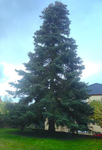 Elagage, abattage d'arbres même dangereux