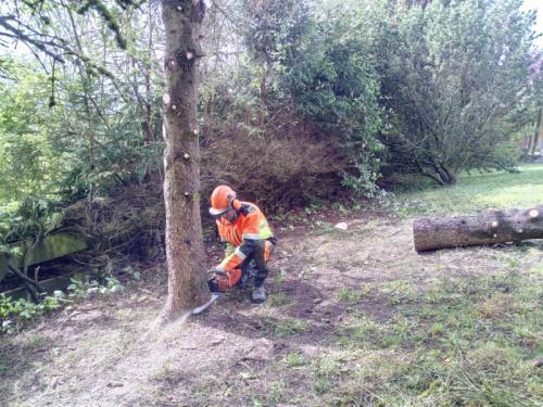 Abattage et élagage d'arbres