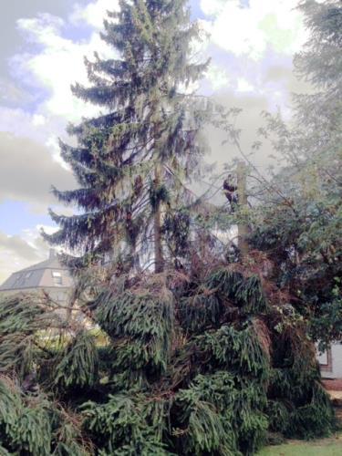 Elagage et coupe des arbres