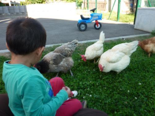 Rencontre avec la nature & les animaux