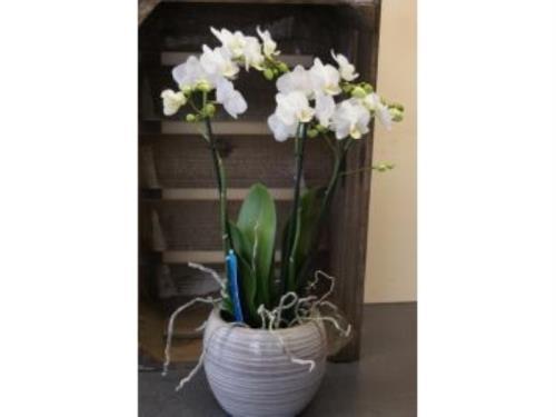 Assemblement d'orchidées