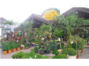 Grand choix de plantes d'extérieur & arbustes