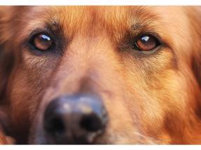 Incinération animaux domestiques