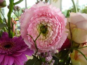 beauté en rose