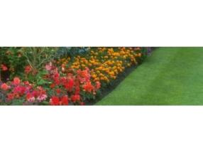 Domestic Gardening