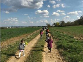 Promenade & cueillette de primevères